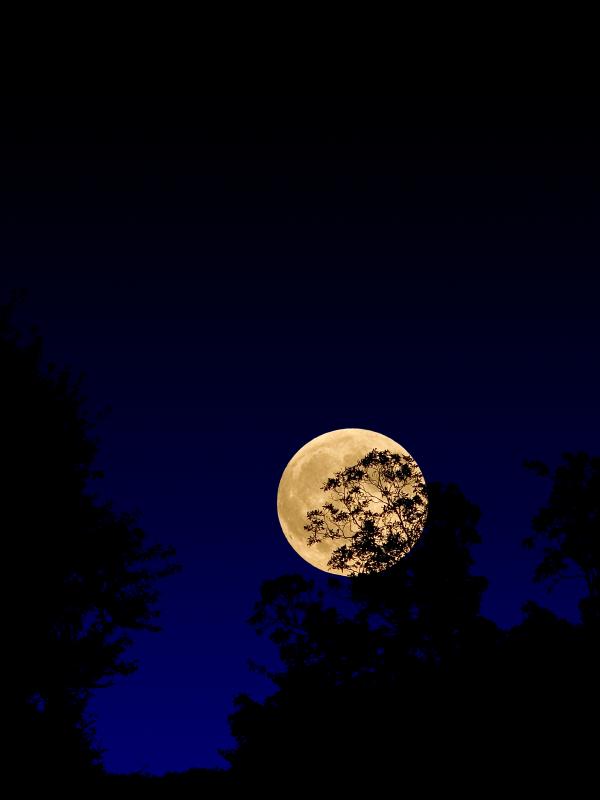 Harvest moon, la Luna del raccolto.
